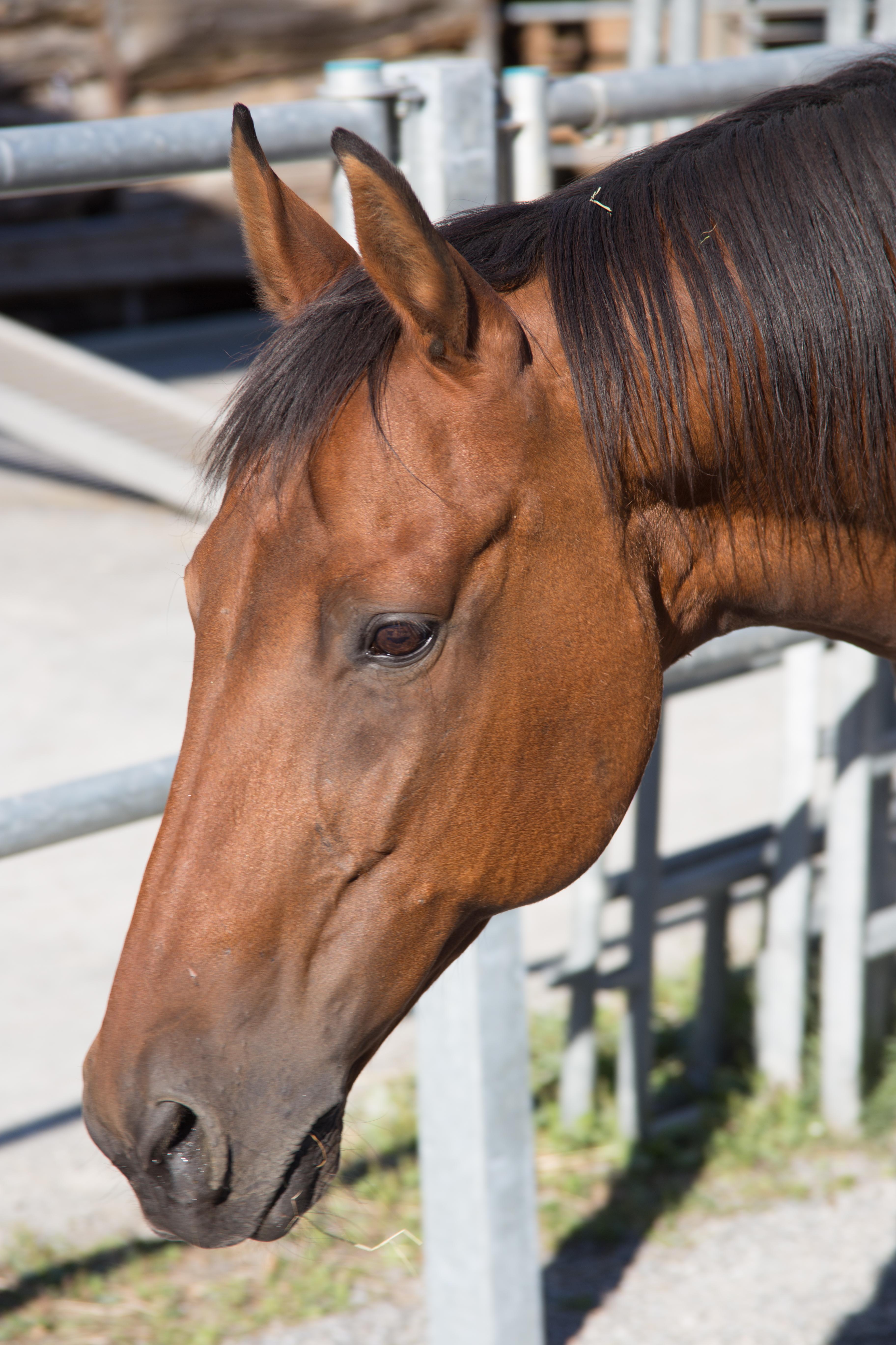 stangen bodenarbeit pferd
